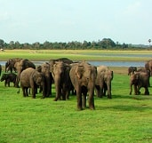 watch-elephants-srilanka
