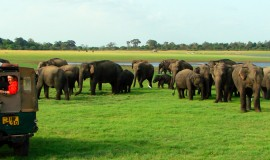 Wildlife Tour Package