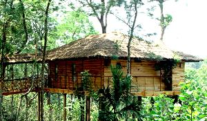 Vythiri Tree House