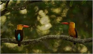bird-sunda-2